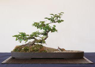 rosemoor 06